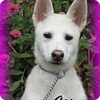 Adopt A Pet :: Aspen - Anaheim Hills, CA