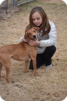 Labrador Retriever Mix Dog for adoption in Eden Prairie, Minnesota - Bella