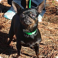 Adopt A Pet :: Chanel - Brownsboro, AL