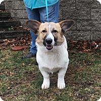 Adopt A Pet :: Julia in RI!!! - Brattleboro, VT