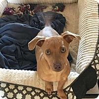 Adopt A Pet :: Milton - San Diego, CA