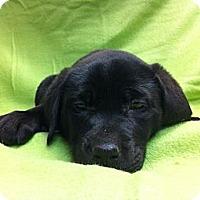 Adopt A Pet :: Bertha - Kingwood, TX