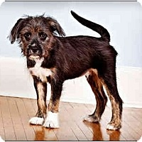 Adopt A Pet :: Seamus - Owensboro, KY