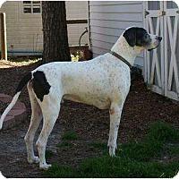 Adopt A Pet :: Toby - Virginia Beach, VA