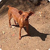 Adopt A Pet :: Rosie - Oceanside, CA