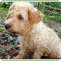 Adopt A Pet :: Corky- g - Franklinton, NC
