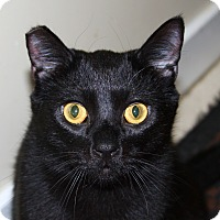 Adopt A Pet :: Lucas - North Branford, CT