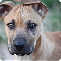 Adopt A Pet :: Sneezy - Austin, TX