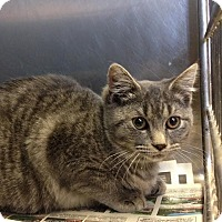 Adopt A Pet :: Pixie - East Brunswick, NJ