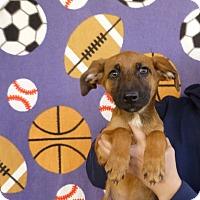 Adopt A Pet :: Paparika - Oviedo, FL