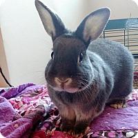 Adopt A Pet :: Elphie - Portland, ME