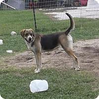 Adopt A Pet :: Trixie - Bonifay, FL
