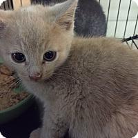 Adopt A Pet :: Kalen - Forest Hills, NY