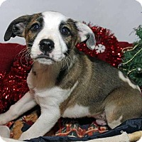 Adopt A Pet :: Rafael - Erwin, TN