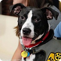 Adopt A Pet :: Franklin - Washington, DC