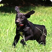 Adopt A Pet :: Mary Jane~ meet me! - Glastonbury, CT