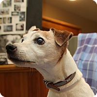 Adopt A Pet :: Bentley - Newtown, CT