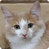 Adopt A Pet :: Sunny - Naugatuck, CT
