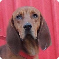 Adopt A Pet :: Denver - Joplin, MO