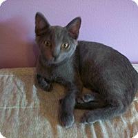 Adopt A Pet :: Kingsley - Tampa, FL