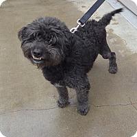 Adopt A Pet :: Oreo - Quail Valley, CA