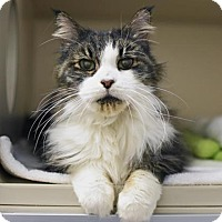 Adopt A Pet :: Alfred - Denver, CO
