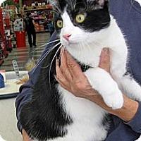 Adopt A Pet :: Clark - San Pedro, CA