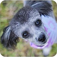 Adopt A Pet :: Smokey - Kingwood, TX