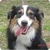 Adopt A Pet :: Layla - Orlando, FL