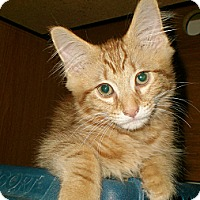 Adopt A Pet :: Tomlin - Byron Center, MI