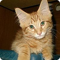 Adopt A Pet :: Tomlin - Byron Center, MI
