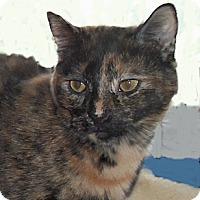 Adopt A Pet :: Cassandra - Colmar, PA