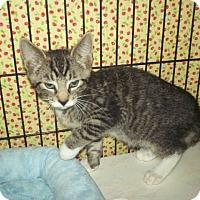Adopt A Pet :: Tiny - Colmar, PA
