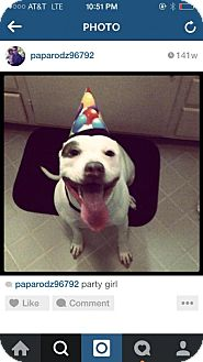 American Bulldog/American Staffordshire Terrier Mix Dog for adoption in Mission Viejo, California - Makanani