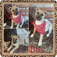 Adopt A Pet :: Ben in CT - Manchester, CT