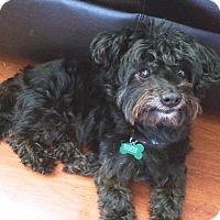 Adopt A Pet :: Pepper - West Los Angeles, CA