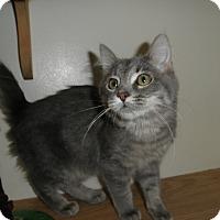 Adopt A Pet :: Yoshi - Milwaukee, WI
