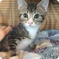 Adopt A Pet :: Kenny - Breinigsville, PA
