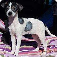 Adopt A Pet :: Chrissy (5 lb) UNIQUE Puppy! - SUSSEX, NJ
