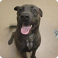 Adopt A Pet :: Smokey - Las Vegas, NV