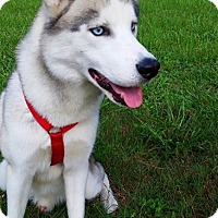 Adopt A Pet :: Kiba - Clearwater, FL
