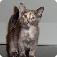 Adopt A Pet :: Willow - Roanoke, VA