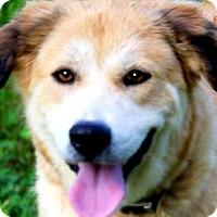 Adopt A Pet :: ELLA(A TRUE LADY-SO GENTLE!! - Wakefield, RI