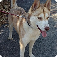 Adopt A Pet :: Max - San Diego, CA