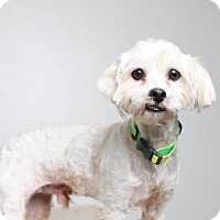 Adopt A Pet :: Lito D161272: PENDING ADOPTION - Edina, MN