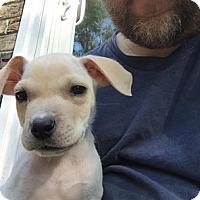 Adopt A Pet :: Marly - Summerville, SC