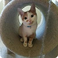 Adopt A Pet :: Peanut - Virginia Beach, VA
