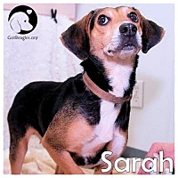 Adopt A Pet :: Sarah - Novi, MI