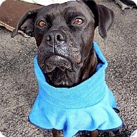 Adopt A Pet :: Luna - Carmel, NY