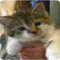 Adopt A Pet :: Weston - Arlington, VA